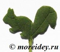 Необычные штампы из листьев