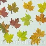 Аппликации из осенних листьев с помощью фигурных дыроколов