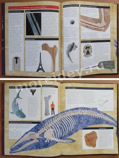"книга Стива Дженкинса: ""Кости и скелеты"""