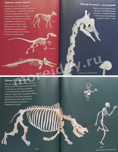 скелеты людей и животных