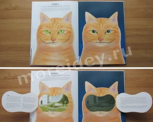 зрение животных: как видят кошки в темноте