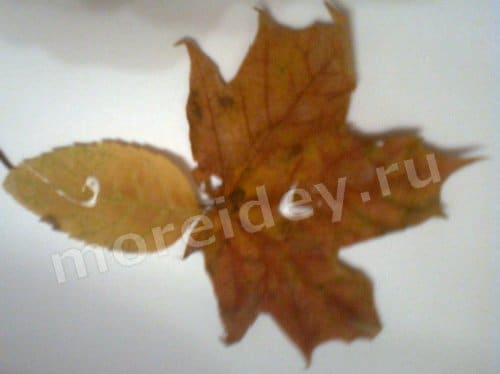 поделка картина из листьев