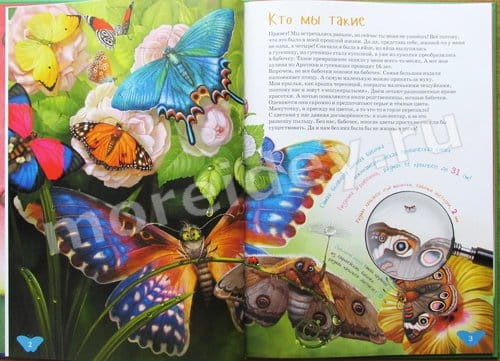 книга я бабочка