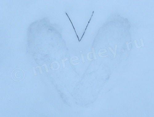 игры со снегом на прогулке