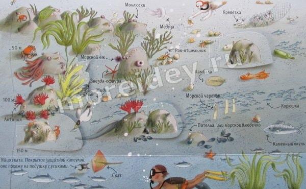 детские книги о природе и животных