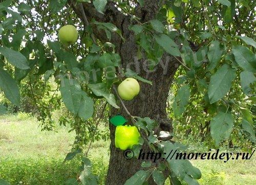 Яблоко из пластиковых бутылок поделка для дачи, сада, двора