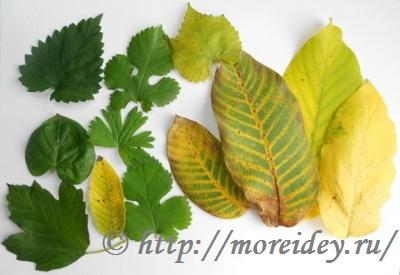 Как сделать поделку из осенних листьев мастер класс пошагово