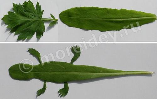 Аппликация из засушенных растений