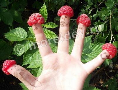 детские потешки про пальчики