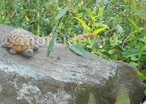 поделка из скорлупы грецкого ореха - черепаха