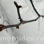 Зимние игры с детьми на улице — охота на зимние звуки и неведомых зверушек