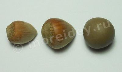 Поделки из природного материала: поделки из орехов