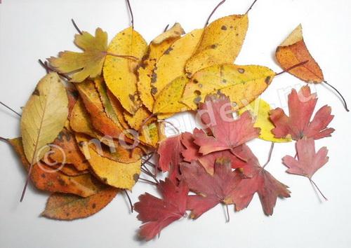 поделки из осенних листьев мастер-класс с фото