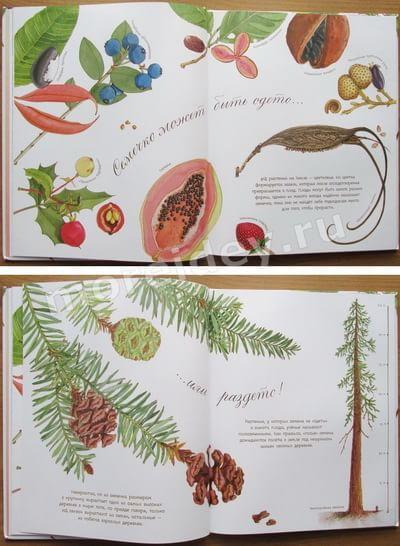 арт-энциклопедии Дианны Астон для детей