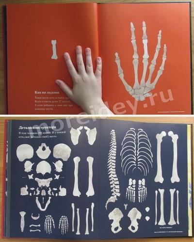 анатомия для малышей