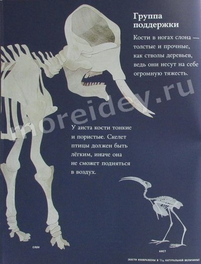 скелеты животных и птиц фото