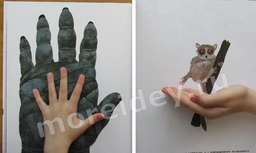 """книга для детей о животных - Стив Дженкинс: """"Сравни"""""""