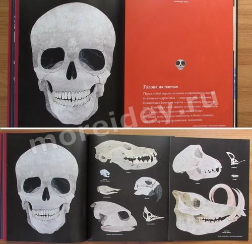 книга для детей по анатомии про кости и скелеты
