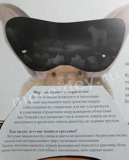 Как видят летучие мыши