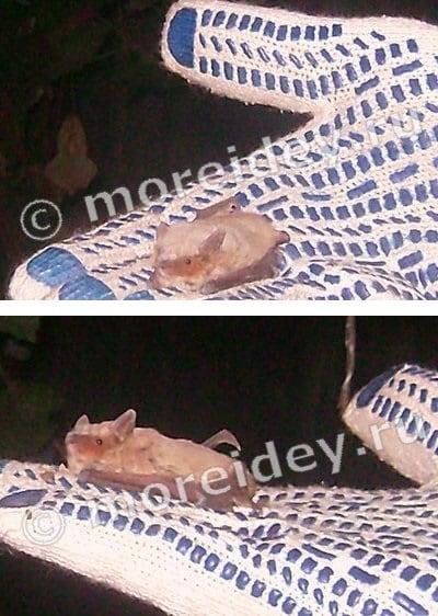 образ жизни летучих мышей