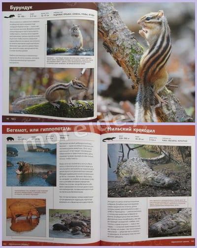 детские энциклопедии о животных