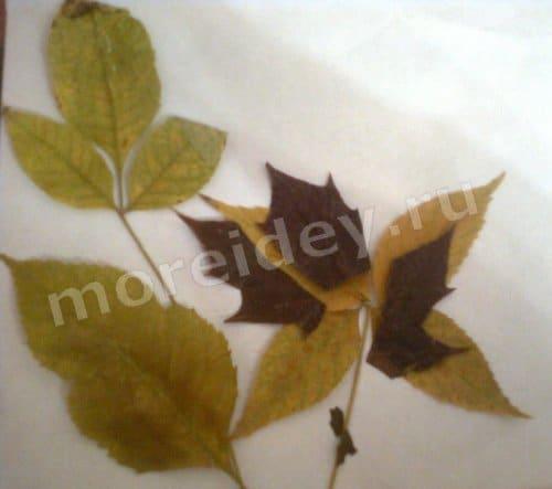аппликации из осенних листьев фото