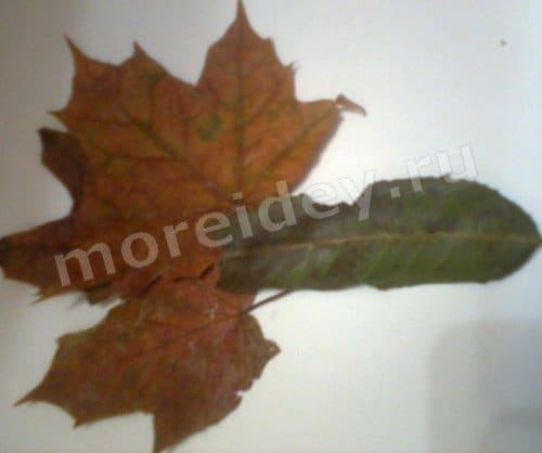 аппликация своими руками из листьев