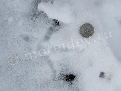 следы на снегу фото