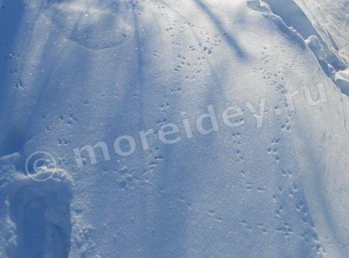 следы птиц на снегу фото