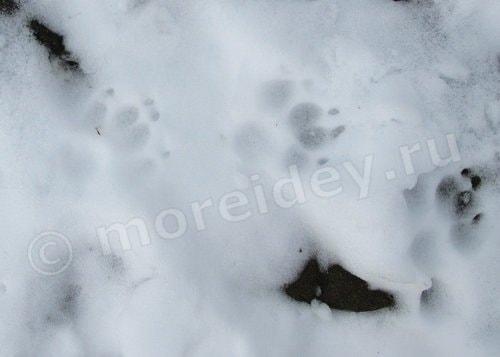 какие бывают следы на снегу