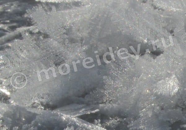 ледяные цветы