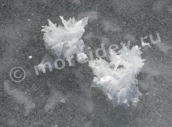 ледяные цветы в арктике