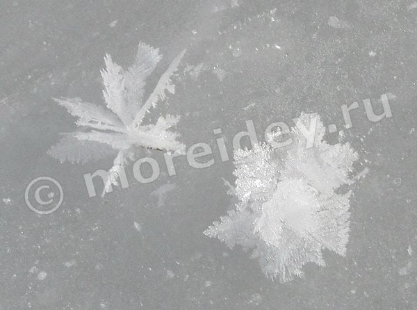цветы из снега и льда