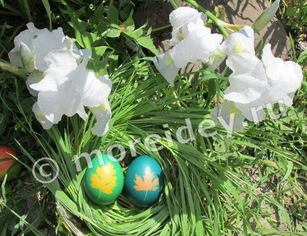наложения листиков растений на яйца