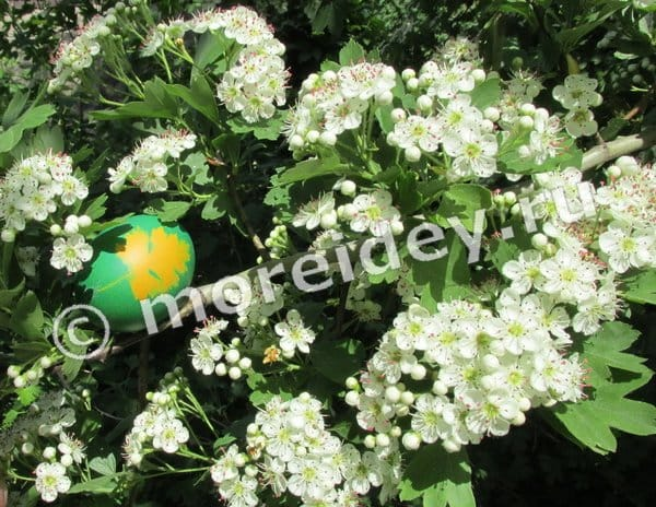 яйца крашенные с листиками