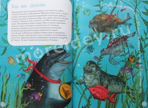 книга я дельфин